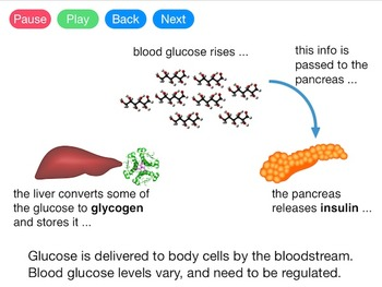 Controlling Blood Glucose (Video)