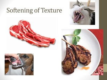 Cooking Food and Heat Transfer