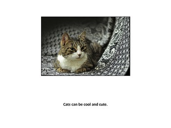 Cool Cats with C