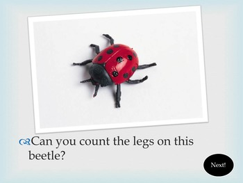 Cool Facts All About Insects! {PowerPoint Presentation}
