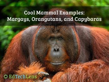 Cool Mammal Examples: Margays, Orangutans, and Capybaras PDF