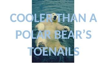 Cooler Than a Polar Bear's Toenails