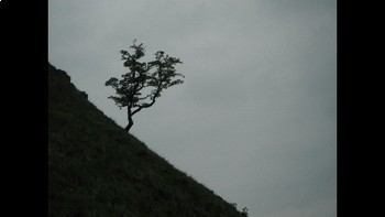 Copyright Free Photographs for Authors. Nature 2