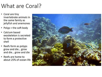 Coral Bleaching PowerPoint (with handout)