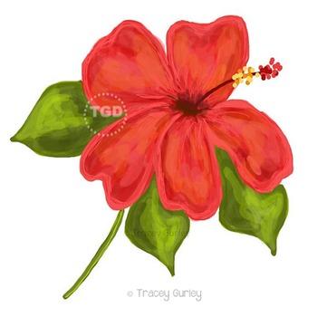 Coral Hibiscus Illustration, Hibiscus clip art, Printable