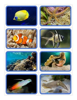 Coral Reef Flashcards