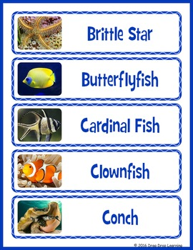 Coral Reef Word Wall