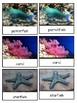Coral Reef 3-part cards--Safari LTD Coral Reef Toob