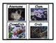 Coral Reef Animal Flashcards