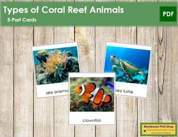 Coral Reef Animals: 3-Part Cards