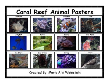 Coral Reef Animals Bundle