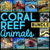 Coral Reef Animals: Article, QR Code Research Page & Fact Sort BUNDLE