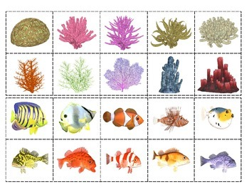 Coral Reef Animals: Match-up and Vocabulary Enrichment Cards