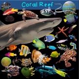 Coral Reef Clip Art Ocean Habitats Biome 70 Photo & Artistic Digital Stickers