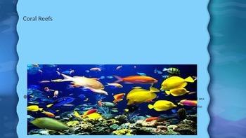 Coral Reef Presentation