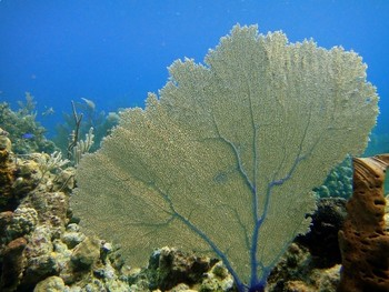 Coral Reefs and Ocean Diversity (850L) - Science Informational text