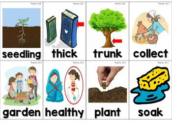 Core Knowledge (CKLA) Vocabulary & Word Wall Cards for Domain 4: Plants
