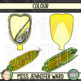 Corn Diagram Clipart