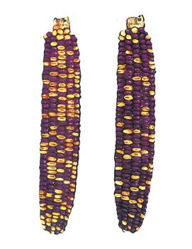 Corn Genetics Monohybrid