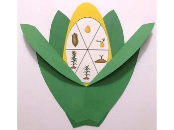 Corn Life Cycle Craft