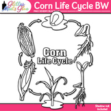 Corn Life Cycle Clip Art | Great for Plant Groups & Native American Studies B&W