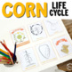 Corn Montessori Life Cycle Printables