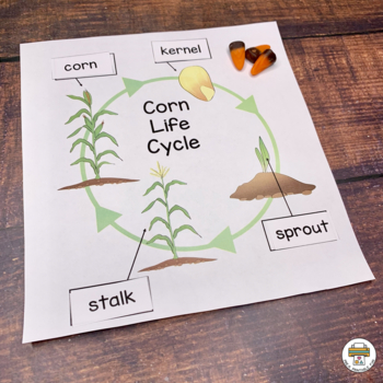 Fall Scarecrows, Crows and Corn Activities for Pre-K, Preschool and Tots