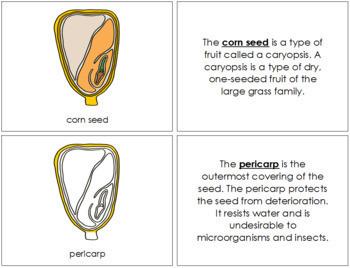 Corn Seed Nomenclature Book