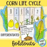 Corn life cycle plant foldout for interactive notebook