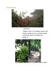 Cornell Notes (Climate and Vegetation) Latin America and S