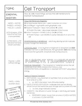 Cornell Notes Cell Membrane Transport
