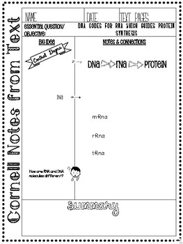 Cornell Notes:Protein Synthesis