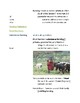 Cornell Notes  (Living in Sub-Saharan Africa / Africa Sout