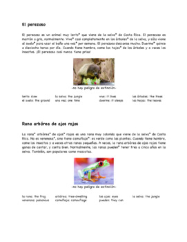 Costa Rican Animals Jigsaw Group Activity in Spanish