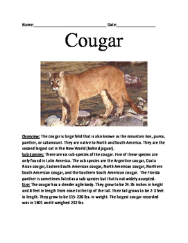Cougar - Mountain Lion Informational article lesson facts questions word search