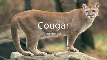 Cougar Mountain Lion - Power Point information facts review pictures