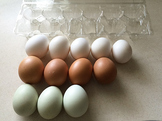 Counting Sorting & Patterns with Eggs Packet