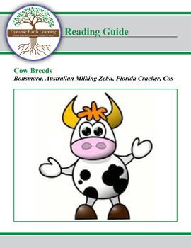 Cow Breed Research:  Bonsmara, Australian Milking Zebu, Florida Cracker, Cos