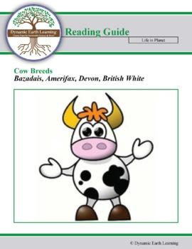 Cow Breed Research Guide:  Bazadais, Amerifax, Devon, British White