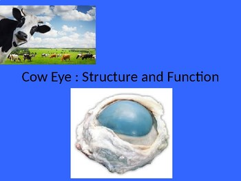 Cow Eye Powerpoint of Parts Structure and Function
