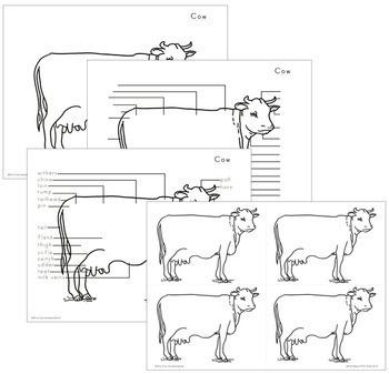 Cow Nomenclature - Elementary