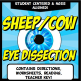 Cow Sheep Eye Dissection