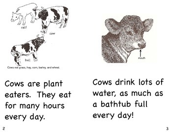 Cows- a non-fiction guided reading book