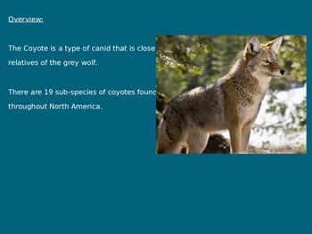Coyote - Power Point - History Facts Information Pictures