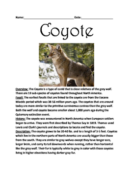 Coyote - informational article lesson with review questions vocabulary