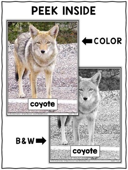 Close Reading Passage - Coyote Activities