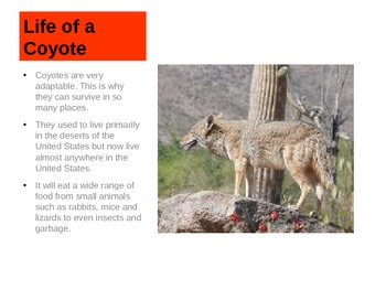 Coyotes PowerPoint
