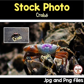 Crab Stock Photo- Animals