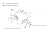 Crab Vocab and Body Map