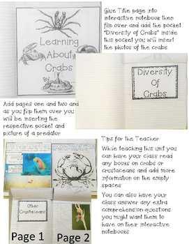 Crabs Interactive Notebook